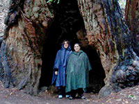 Karen Force & friend stand right Inside a giant Redwood tree in Muir Woods forest