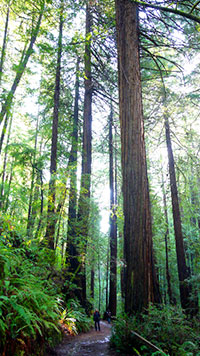 The Famous Muir Woods To Sausalito Tour By Tom Martell